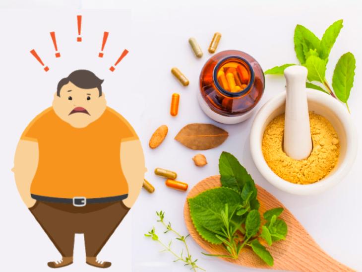 एलोपैथी और आयुर्वेद मिलाकर बनाई नई दवा, यह डायबिटीज कंट्रोल करने के साथ हार्टअटैक और मोटापे से भी बचाएगी|लाइफ & साइंस,Happy Life - Dainik Bhaskar