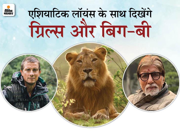 अब गुजरात के गिर में हो सकती है मैन vs वाइल्ड की शूटिंग, बेयर ग्रिल्स के साथ अमिताभ नजर आ सकते हैं गुजरात,Gujarat - Dainik Bhaskar