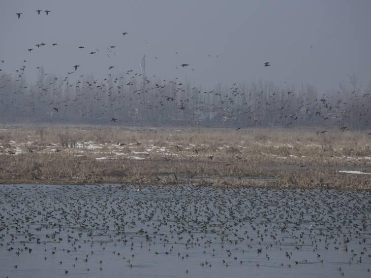 एक अनुमान के मुताबिक हर साल दुनियाभर से 33 प्रजातियों वाले 5 लाख से ज्यादा पक्षी यहां आते हैं। फोटो-आबिद भट