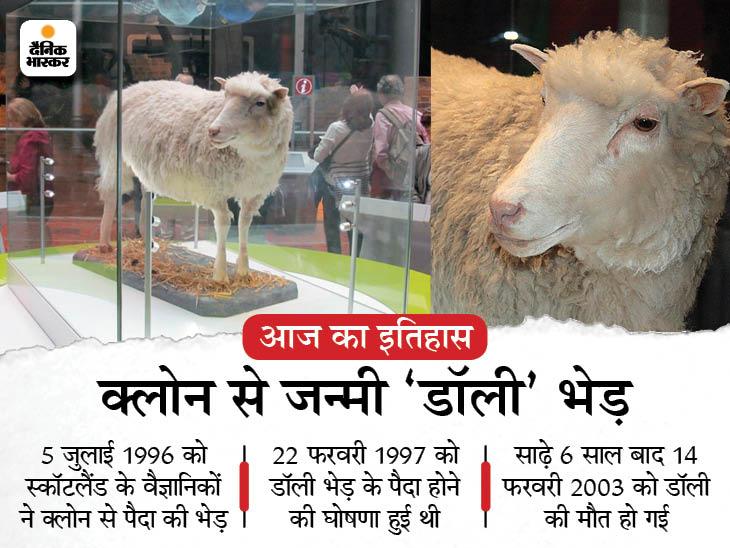 डॉली भेड़ की घोषणा, जिसे वैज्ञानिकों ने लैब में बनाया था; इसका नाम अमेरिकी सिंगर के नाम पर रखा गया था देश,National - Dainik Bhaskar