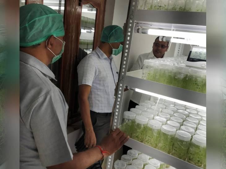 2018 में शिवम ने टिशू कल्चर विधि से खेती शुरू की है। इसमें बहुत ही कम समय में एक टिशू से कई प्लांट्स तैयार हो जाते हैं।