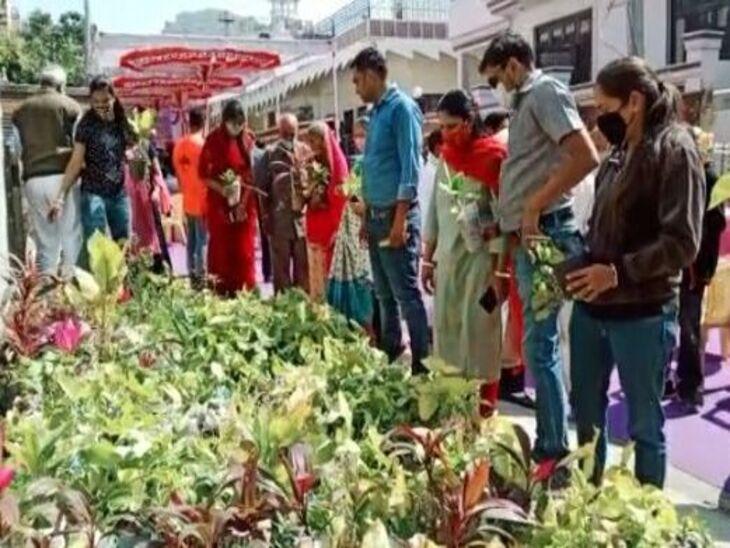 550 पौधों का निशुल्क वितरण; BSNL से रिटायर्ड कर्मचारी ने घर में ही सजाई फुलवारी अजमेर,Ajmer - Dainik Bhaskar