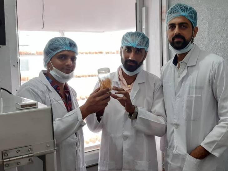 UPSC में चयन नहीं हुआ तो तीन दोस्तों ने मिलकर मिलिट्री मशरूम की खेती शुरू की, आज लाखों में है कमाई|DB ओरिजिनल,DB Original - Dainik Bhaskar