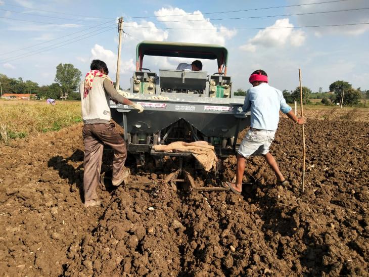 गुरु अपने खेत में हर साल तीन फसलें उगाते हैं, ये सभी नगदी फसलें होती हैं।