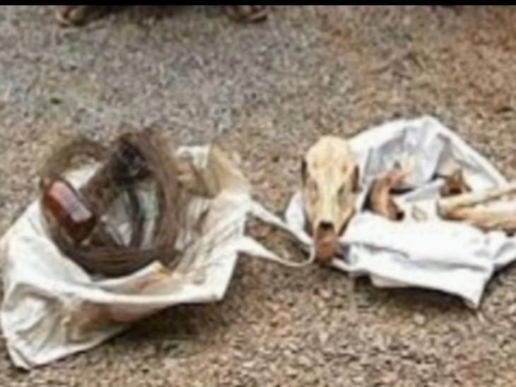शिकारियों से बरामद चीतल का सिर, सींग व मास, साथ में वह तार कर करंट लगाकर उसे मारा गया