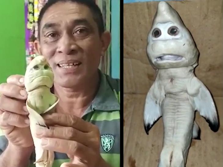 मछुआरे ने पकड़ी इंसान की शक्ल जैसी दिखने वाली शार्क मछली, जन्मजात बीमारी के कारण बदला मुंह|लाइफ & साइंस,Happy Life - Dainik Bhaskar