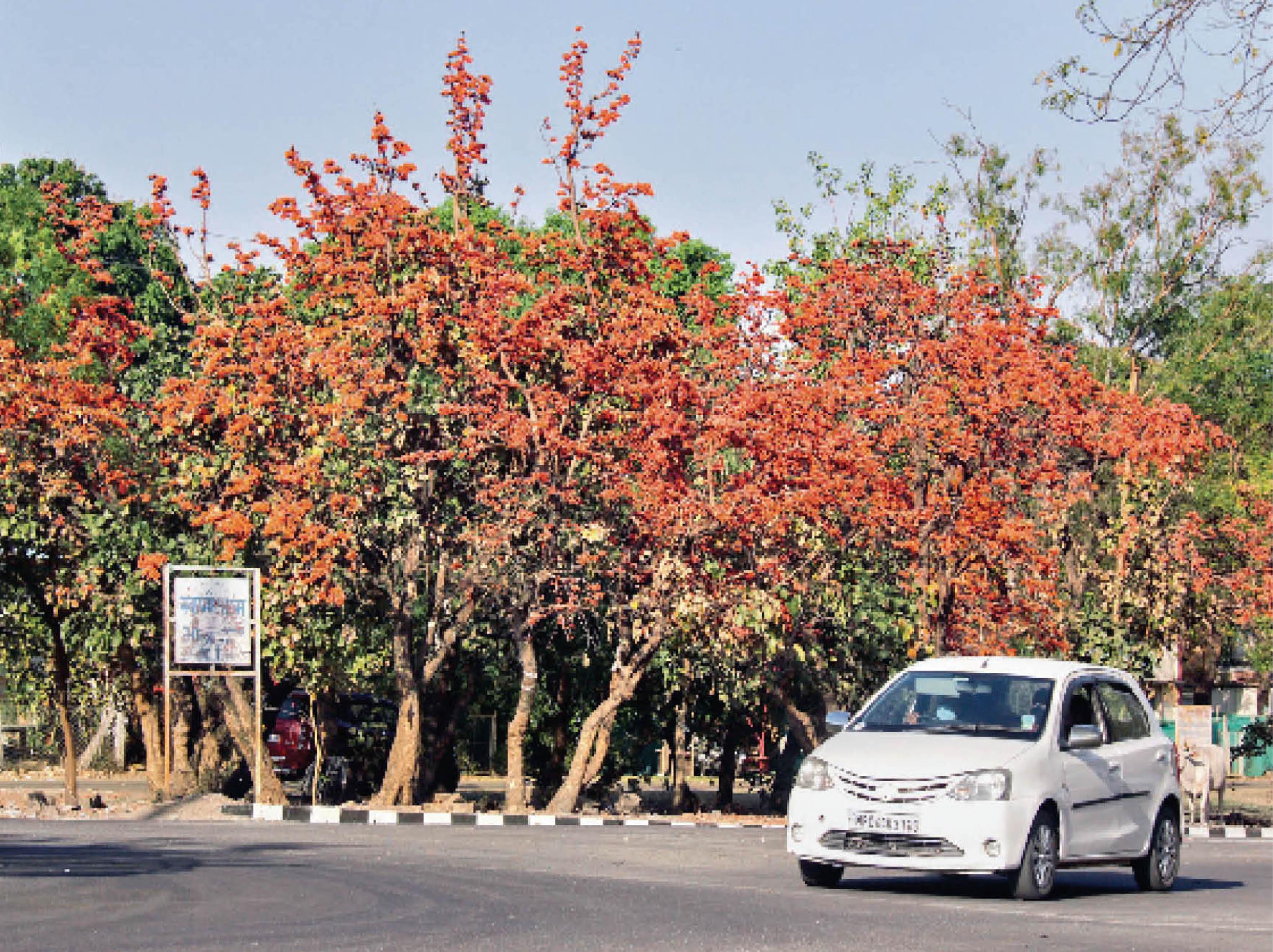 भेल स्थित कालीबाड़ी रोड की फोटो। - Dainik Bhaskar