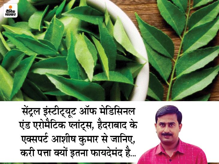 दिल की बीमारी और कैंसर से बचाता है करी पत्ता, यह खाने का टेस्ट बढ़ाकर दस्त और उल्टी में भी राहत देता है|लाइफ & साइंस,Happy Life - Dainik Bhaskar
