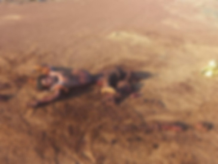 छत्तीसगढ़ के गरियाबंद में हाथियों ने धान खरीदी केंद्र में एक चौकीदार को कुचलकर मार डाला। - Dainik Bhaskar