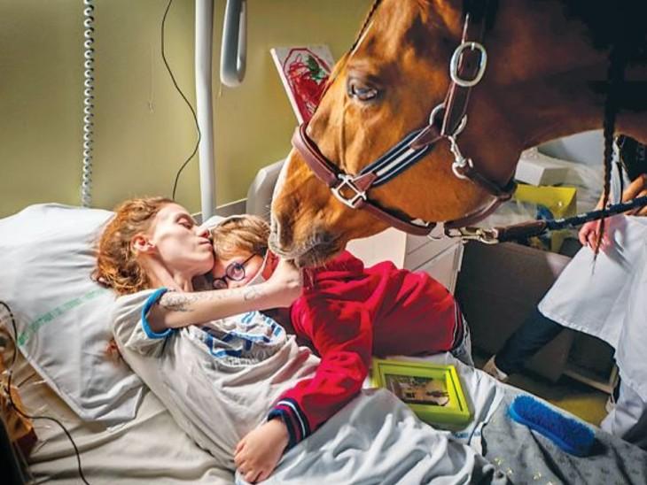 कैंसर से जूझ रहे मरीजों का दर्द दूर करता है घोड़ा, पैरों से इशारा कर बताता है कि उसे किस मरीज से मिलना है|विदेश,International - Dainik Bhaskar