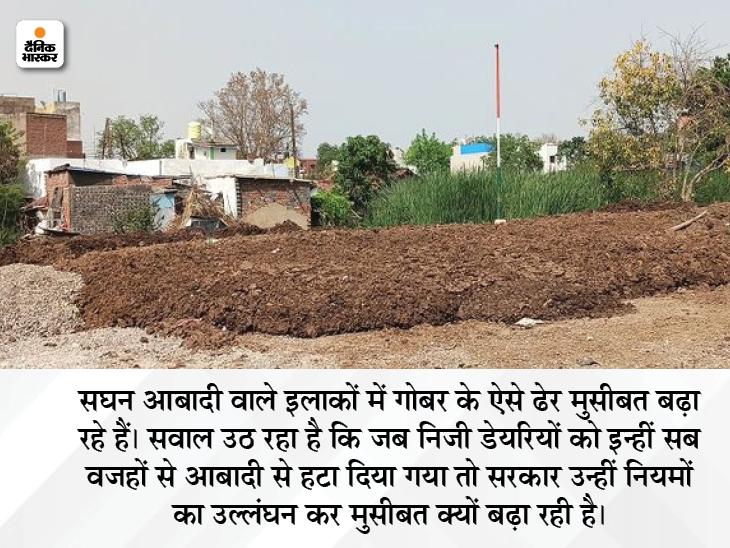 रायपुर शहर में आबादी के बीच गोबर के ढेर बने नई मुसीबत, इसमें फंस रहीं हैं गायें, स्थानीय लोग भी गंदगी-बदबू से परेशान|रायपुर,Raipur - Dainik Bhaskar