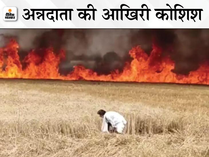 हार्वेस्टर की चिंगारी से खेतों में आग लगी, फसल जलती देख एक किसान ने हंसिए से काटना शुरू कर दिया|विदिशा,Vidisha - Dainik Bhaskar