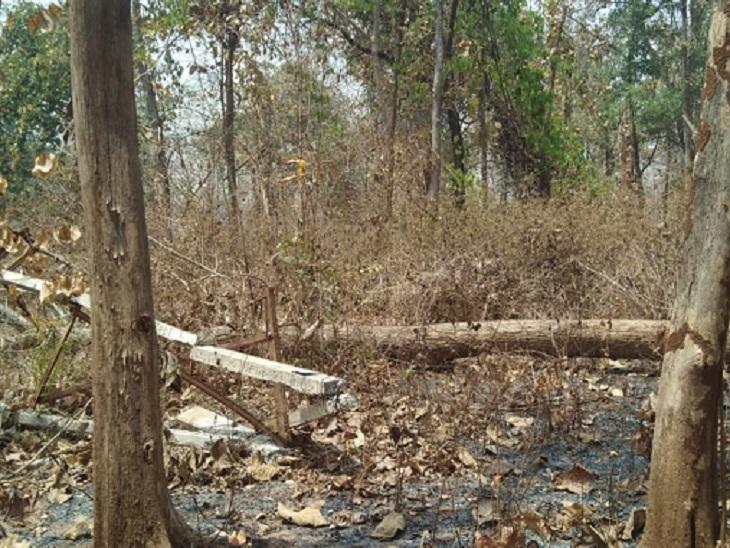 छत्तीसगढ़ के बीजापुर में पेड़ टूटकर गिरनेे से बिजली के 6 पोल गिर गए। इसके कारण 15 गांवों में विद्युत आपूर्ति बाधित हो गई है। - Dainik Bhaskar