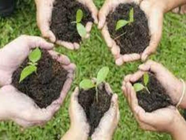1 करोड़ 20 लाख 46 हजार पौधे लगवा चुका ग्रामीण विकास विभाग अब फिर कर रहा बड़ी पहल|पटना,Patna - Dainik Bhaskar
