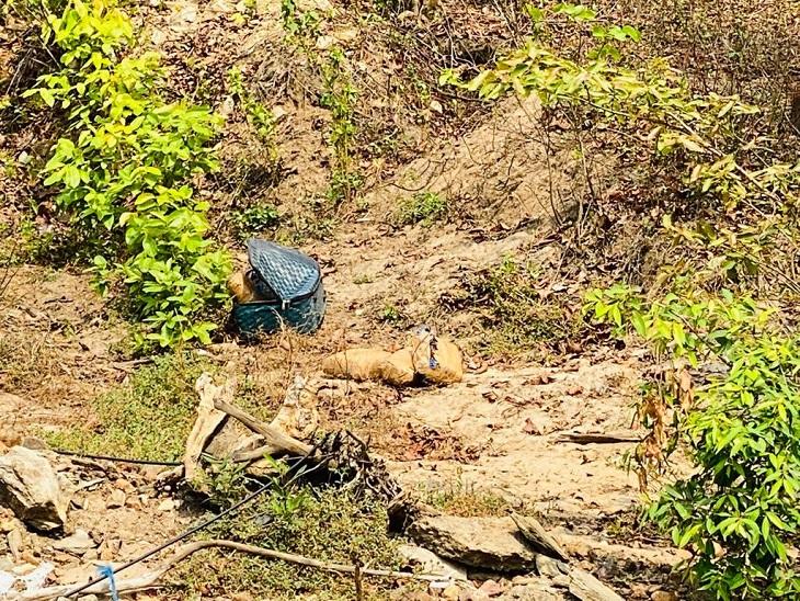 सुकमा में मिला लावारिस सूटकेस, IED की आशंका पर पहुंचे जवानों ने खोला तो मिला पैकेट में 4 किलो गांजा|छत्तीसगढ़,Chhattisgarh - Dainik Bhaskar