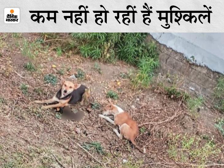 रायपुर में अधजली लाशों को खा रहे कुत्ते, लोग बोले- आंगन में कभी किसी का हाथ तो कभी पैर मिलता है; शिकायत करने गए युवकों पर ही दर्ज हो गई FIR|रायपुर,Raipur - Dainik Bhaskar