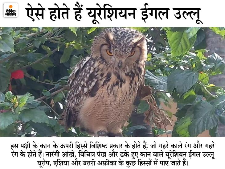 वन विभाग और नोवा नेचर का ज्वाइंट ऑपरेशन; उल्लू की सबसे बड़ी प्रजाति की जान बचाई, 3 दिनों तक कोशिश करने के बाद मिली सफलता|भिलाई,Bhilai - Dainik Bhaskar