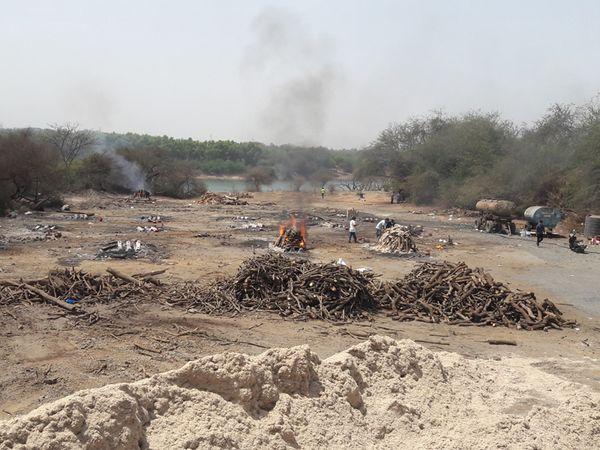 वापी के मुक्तिधाम में 25 दिनों में 331 का अंतिम संस्कार, सरकारी आंकड़ों में सिर्फ 45 की ही मौत का जिक्र गुजरात,Gujarat - Dainik Bhaskar