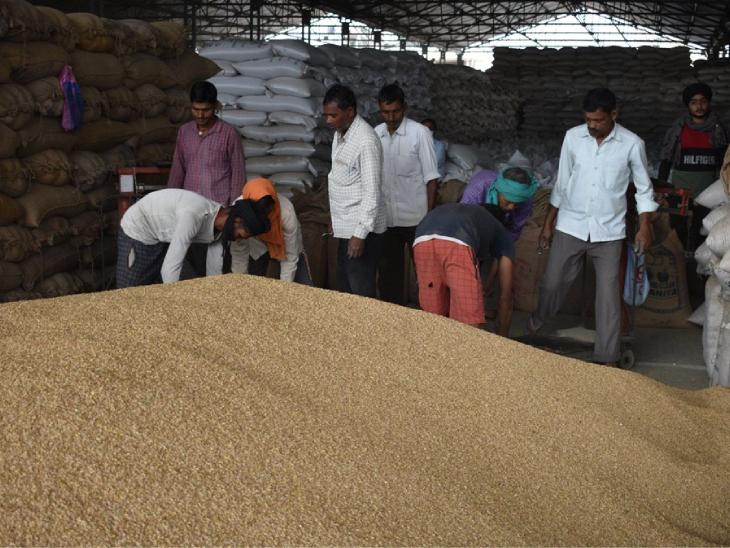 डिप्टी कमिश्नर ने किसानों को निर्धारित मापदंड से अधिक नमी वाला गेहूं मंडियों में न लाने की अपील की - Dainik Bhaskar