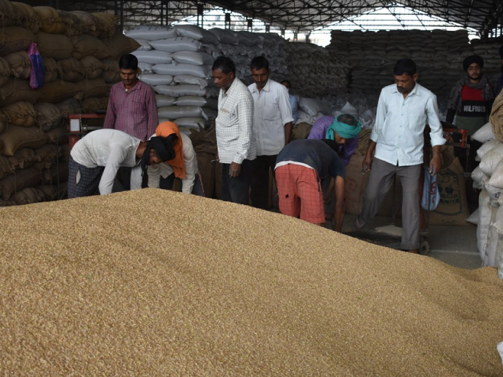 किसानों को 285.15 करोड़ रुपए की उनके खातों में हुई सीधी अदायगी। - Dainik Bhaskar