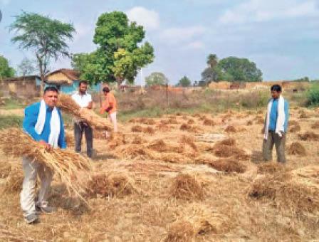 किसानी कार्य में जुटे किसान। - Dainik Bhaskar