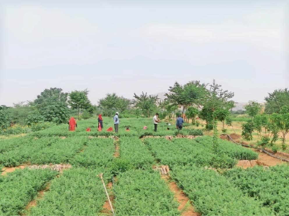वन विभाग की नानी नर्सरी में तैयार औषधीय व अन्य पौधे। - Dainik Bhaskar