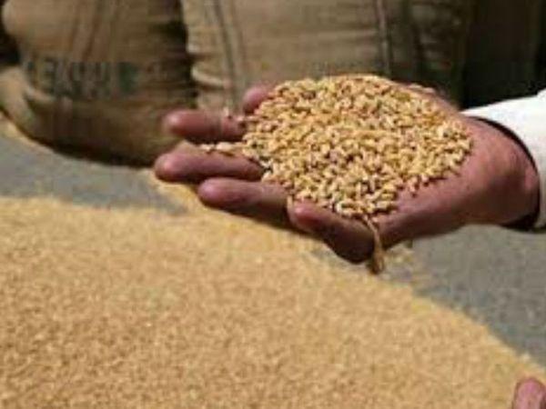 30 अप्रैल से मंडी में बिक्री के लिए आने वाले किसानों को गेट पास जारी नहीं किए जाएंगे। - Dainik Bhaskar