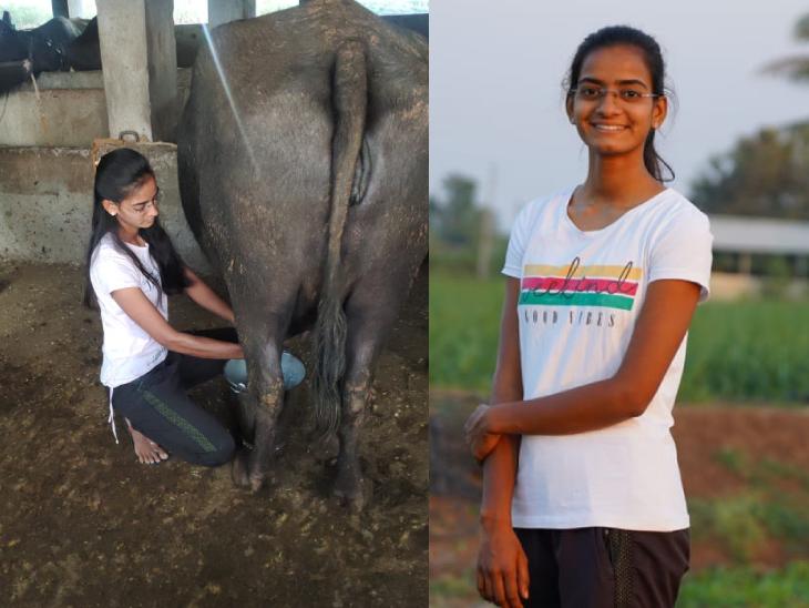 11 साल की उम्र में पिता का बिजनेस संभाला, अब 80 से ज्यादा भैंसें; खुद ही दूध निकालती हैं और डिलीवरी भी करती हैं, हर महीने 6 लाख का टर्नओवर|DB ओरिजिनल,DB Original - Dainik Bhaskar