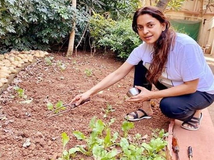फिल्मों से दूर होकर 10 साल से खेती कर रही हैं जूही चावला, पिता के निधन के बाद उनके खरीदे फार्म में उगाती हैं ऑर्गनिक फल-सब्जियां|बॉलीवुड,Bollywood - Dainik Bhaskar