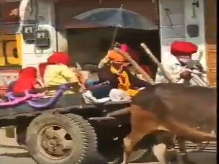 पाली में 50 साल पुरानी परंपरा हुई जीवंत, सोशल डिस्टेंसिंग के साथ दूल्हे के साथ परिवार वाले भी हुए सवार|पाली,Pali - Dainik Bhaskar