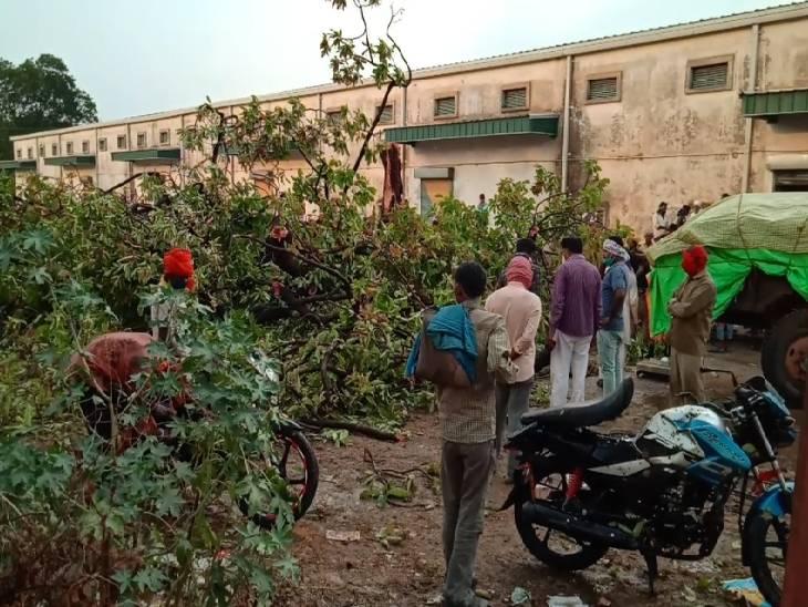 रीवा-सतना में बिजली गिरने से दो बच्चों समेत 4 की मौत, बारिश से बचने के लिए पेड़ के नीचे खड़े थे|रीवा,Rewa - Dainik Bhaskar