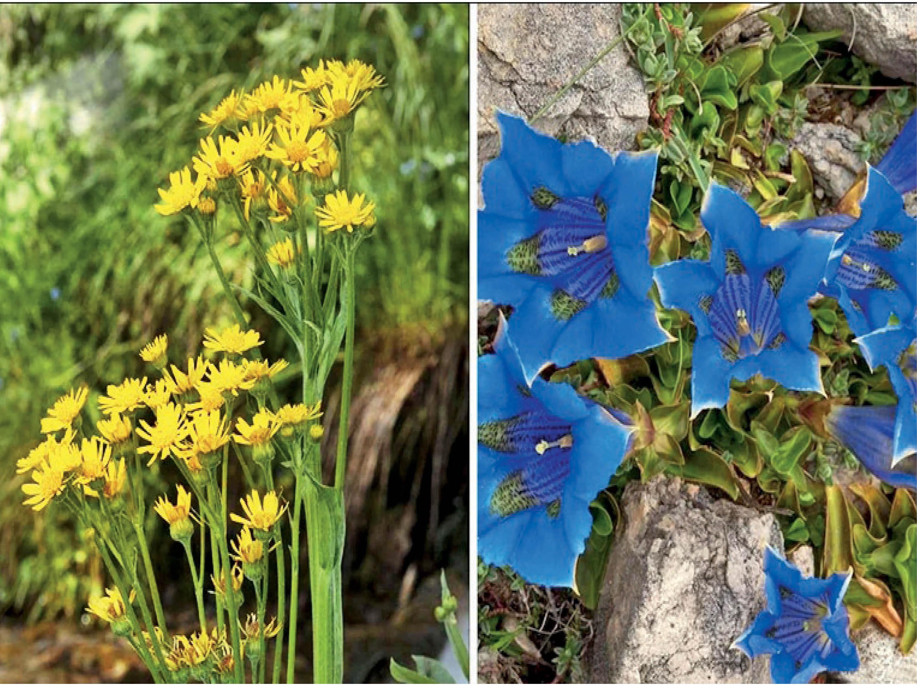 वैज्ञानिकों को रिसर्च के लिए आकर्षित करते हैं सुंदर फूल; नीले, पीले और सफेद रंग के फूल उन्हें ज्यादा पसंद|विदेश,International - Dainik Bhaskar