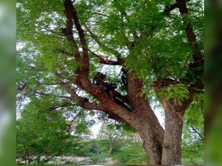 नीम के पेड़ पर 15 फीट ऊंचाई पर चढ़ा युवक, गले में फंदा डालकर लगा दी छलांग, मौत ग्वालियर,Gwalior - Dainik Bhaskar