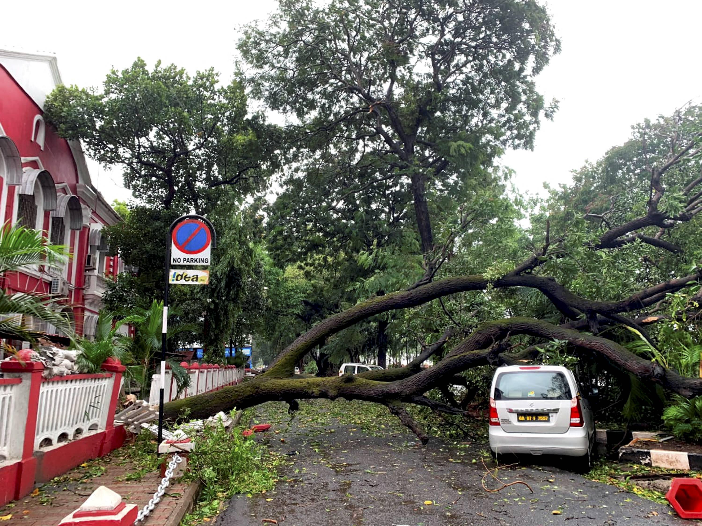 गोवा में चक्रवात का ज्यादा असर है। यहां तेज हवा की वजह से कई पेड़ गिर गए हैं।
