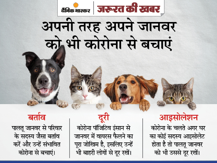 घरों में संक्रमित इंसानों से पालतू जानवरों को भी कोरोना का डर, जानिए पशु वैज्ञानिकों ने आपके कुत्ते-बिल्ली को बचाने के लिए क्या सलाह दी|ज़रुरत की खबर,Zaroorat ki Khabar - Dainik Bhaskar
