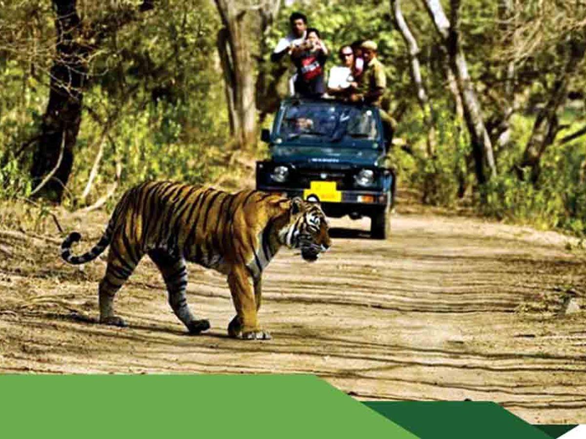 यूनेस्को की टीम को भाए प्राकृतिक सौंदर्य, बाघों के रहवास और पर्यटन स्थल, वर्ल्ड हेरिटेज की संभावित सूची में शामिल मध्य प्रदेश,Madhya Pradesh - Dainik Bhaskar