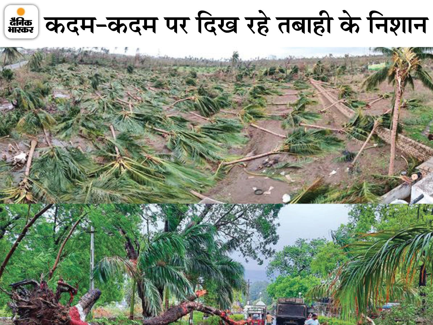 वेरावल में जगह-जगह गिरे पेड़ों का अंबार। - Dainik Bhaskar