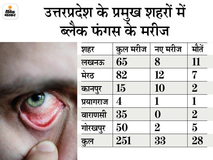 अब तक 33 से ज्यादा की मौत, लखनऊ में हर घंटे सामने आ रहा एक मरीज; KGMU में 96 भर्ती|उत्तरप्रदेश,Uttar Pradesh - Dainik Bhaskar