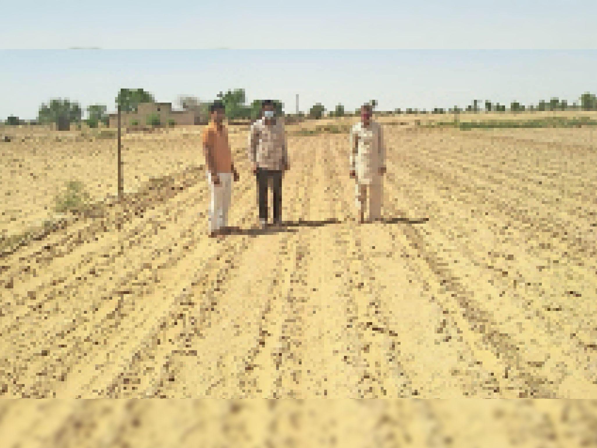 कृषि पर्यवेक्षक कुरंड हुई नरमा-कपास की फसल का जायजा लेते हुए। - Dainik Bhaskar