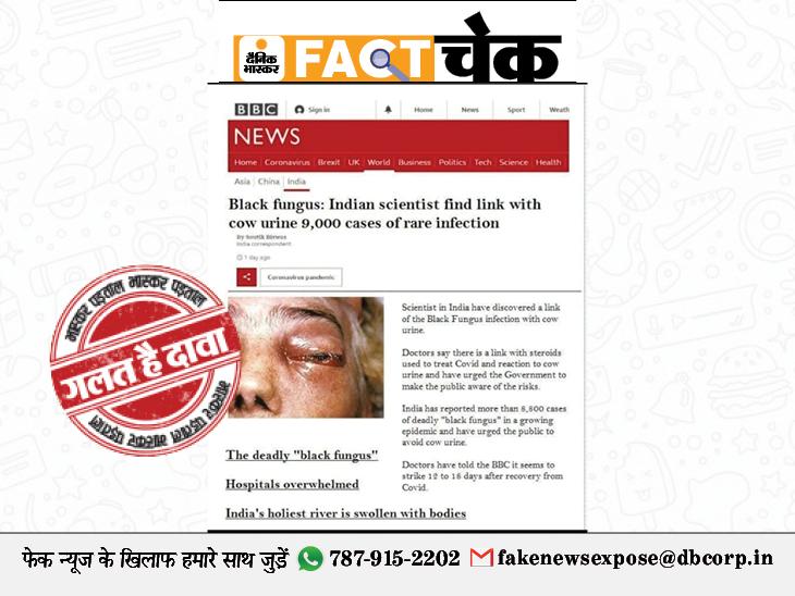 BBC न्यूज ने लिखा, भारत में ब्लैक फंगस का गोमूत्र से लिंक? जानिए इस वायरल पोस्ट का सच|फेक न्यूज़ एक्सपोज़,Fake News Expose - Dainik Bhaskar