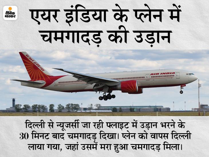 अमेरिका जा रही फ्लाइट के बिजनेस क्लास में दिखा चमगादड़, वापस दिल्ली लाकर इमरजेंसी लैंडिंग कराई गई|देश,National - Dainik Bhaskar