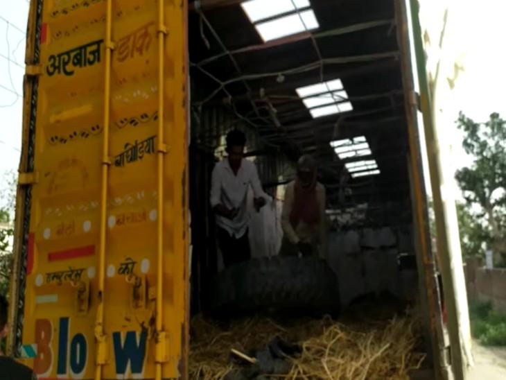 मथुरा में गोरक्षकों ने कराया 35 गोवंश को मुक्त, दो गिरफ्तार; आगरा से दिल्ली ले जा रहे थे|मथुरा,Mathura - Dainik Bhaskar