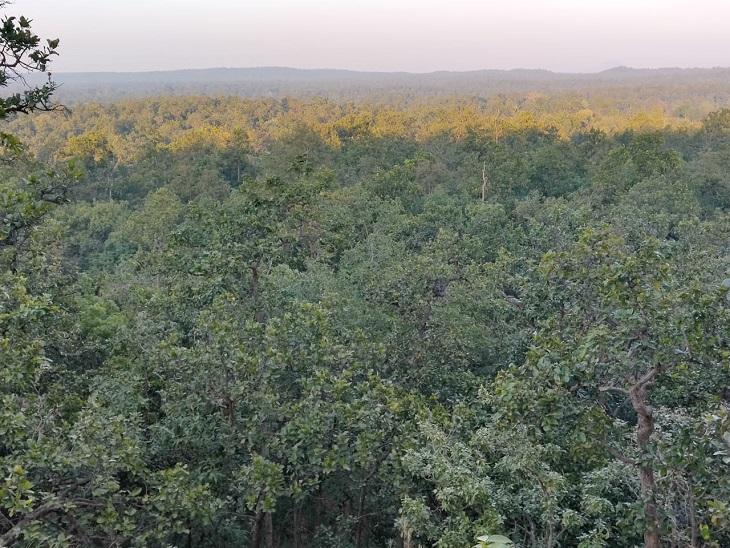 घने जंगलों वाले इस इलाके में ही कई खनन परियोजनाएं प्रस्तावित हैं।