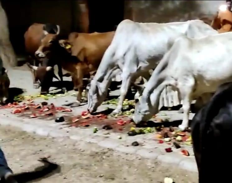 पशुओं ने भी बड़े चाव से छप्पन भोग ग्रहण किया।