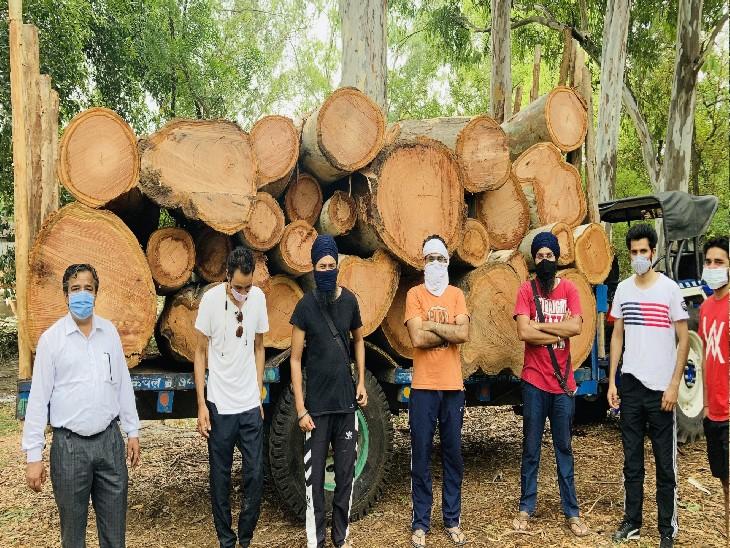 डिपार्टमेंट का तर्क-औषधीय पौधों की ग्रोथ नहीं हो रही थी, इसलिए काट रहे, 67 पेड़ काटे जाने हैं|चंडीगढ़,Chandigarh - Dainik Bhaskar