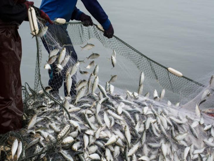 कानपुर में मछली के शिकार पर चार महीने प्रतिबंध, उल्लंघन होने पर डीएम ने FIR दर्ज कर कार्रवाई के दिए आदेश|कानपुर,Kanpur - Dainik Bhaskar