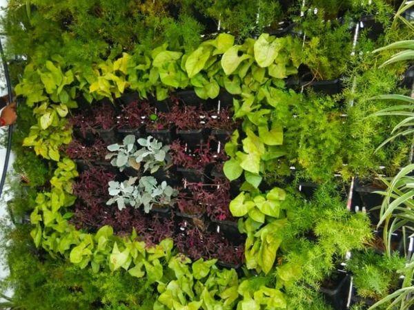 तस्वीर वर्टिकल फार्मिंग की है। इसमें घर की दीवारों पर फूल लगाए जाते हैं। इनडोर फार्मिंग के लिए यह बेहतर विकल्प है।