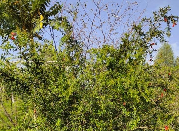 रेंवतसिंह राठौड़ ने बंजर पड़ी जमीन पर सैकड़ों पेड़ उगाए।
