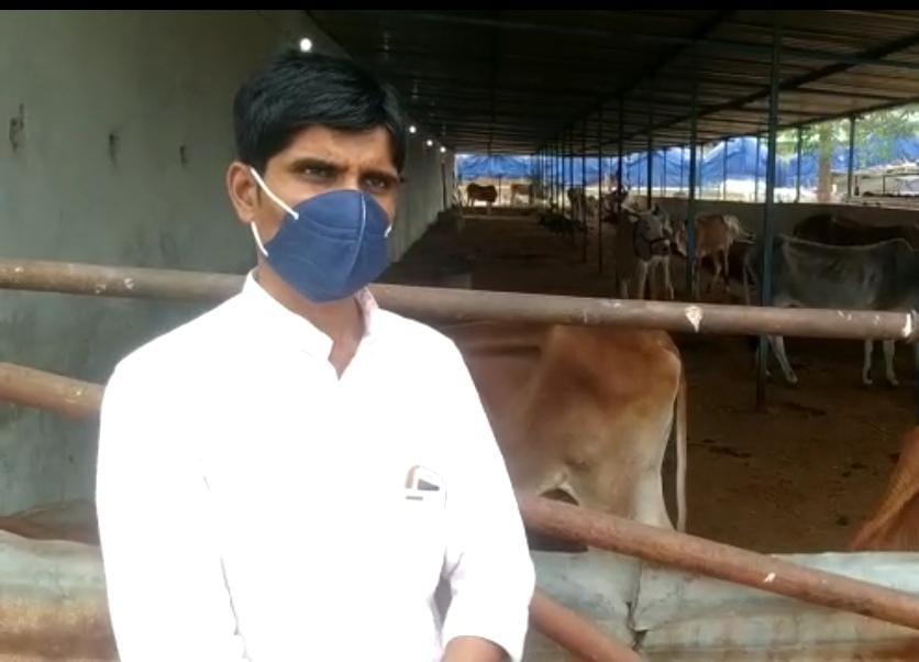 गौशाला के संचालक सुजीत गौर पर केस, पशु चिकित्सक को दिया नोटिस , 8 दिन में 9 गाय और 2 बछड़े की हुई मौत, 2 जानवर बीमार|होशंगाबाद,Hoshangabad - Dainik Bhaskar