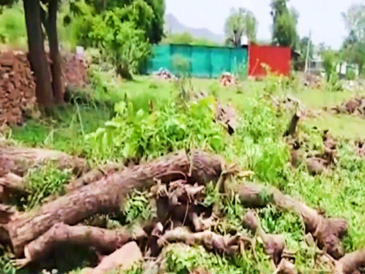हरे भरे पेड़ों की कटाई के बाद सामाजिक संगठनों ने शुरू किया विरोध।